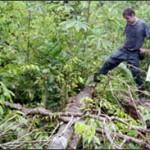Giuliano Guimaraes examines a fallen tree