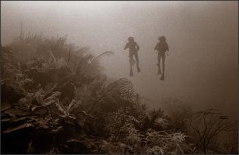 Pinnacle III reef in Discovery Bay