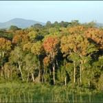forest in Gabon, Africa