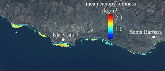 Giant Kelp canopy off the coast of Santa Barbara, as viewed by Landsat 5.