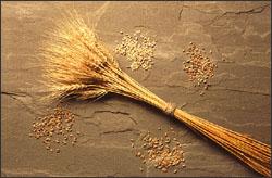 A bundle of wheat.