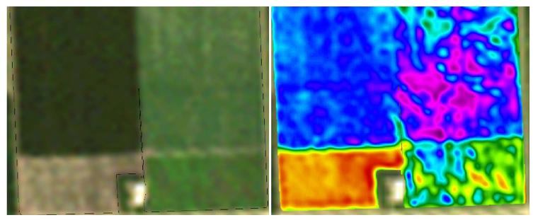 Landsat image of sugar beet fields