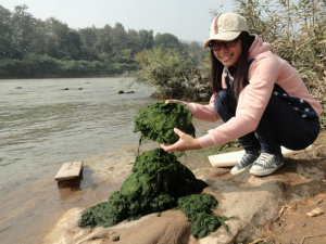 algae collection photo