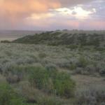 Sagebrush photo from USGS
