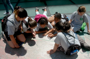 students explore NYC Landsat 8 mosaic