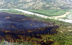 Burned area in Lake Clark NP