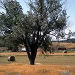 Great Plains photo