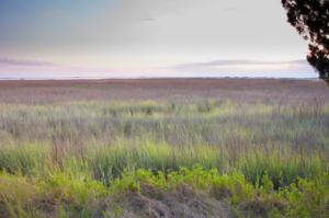 Spartina grass on Sapelo Island