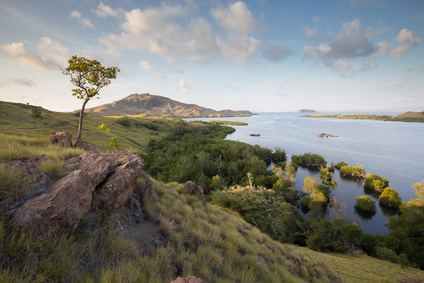 Komodo Mangroves