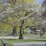 Springtime on an Urban Heat Island