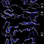 Ucayali River movements