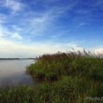 Louisiana coastal marshes