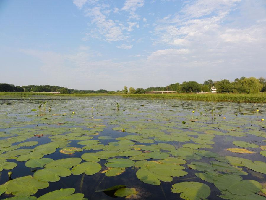 shallow aquatic ecosystem