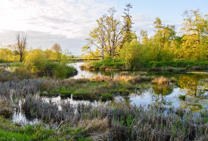 tidal marshes