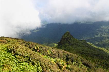 cloud forest El Yunque