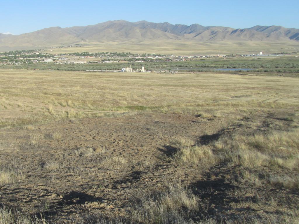 Nevada grassland