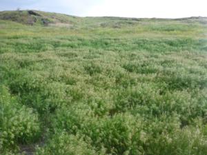 Landsat, Sentinel Harmony Effort Shows Promising Results in Great Basin
