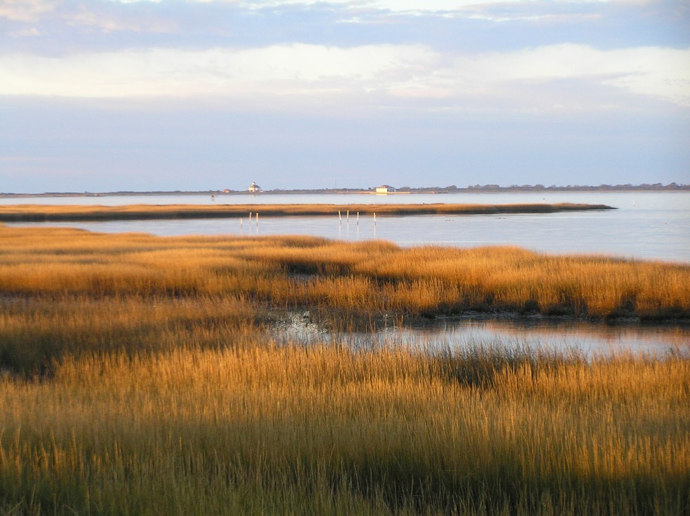 Salt marsh on Assateague Island