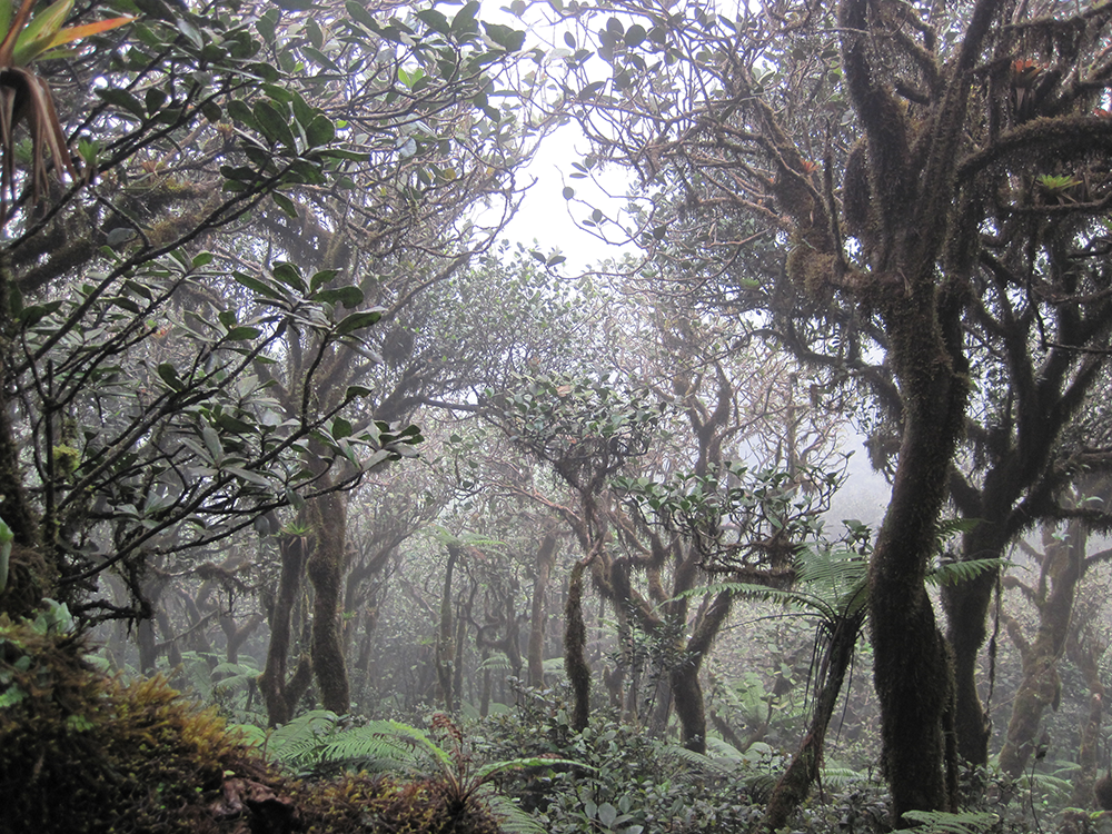 Elfin cloud forest
