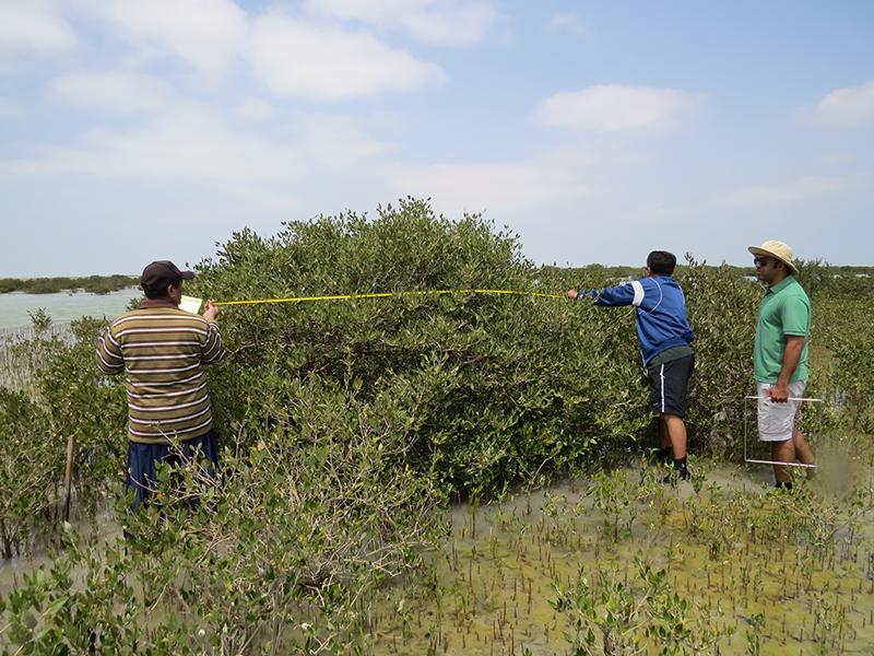 Li and El-Askary's team in field with mangrove