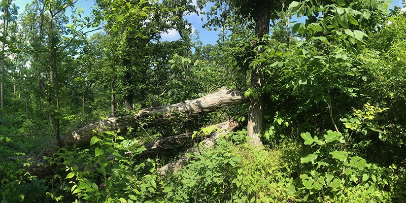 Forest damaged by tornado
