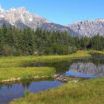 Beaver dam in Grand Teton National Park