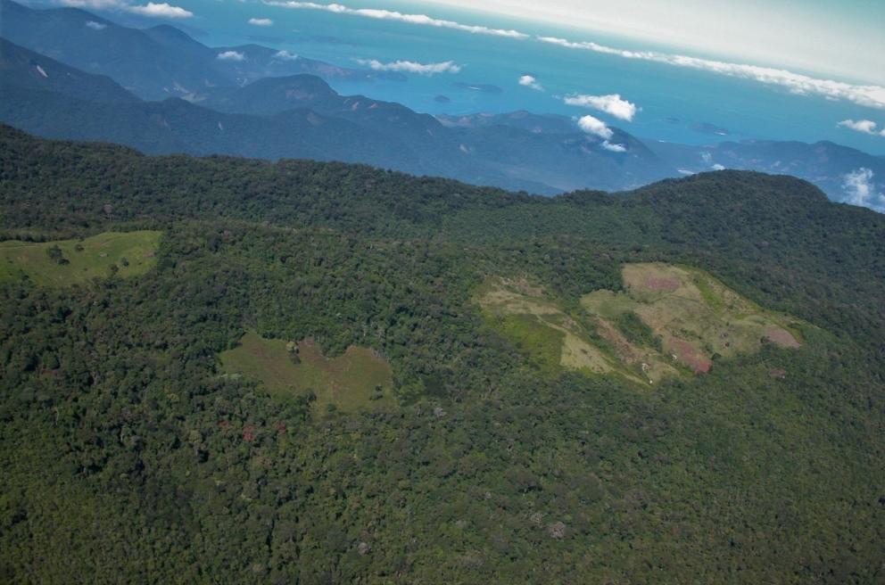 Brazilian Atlantic rainforest